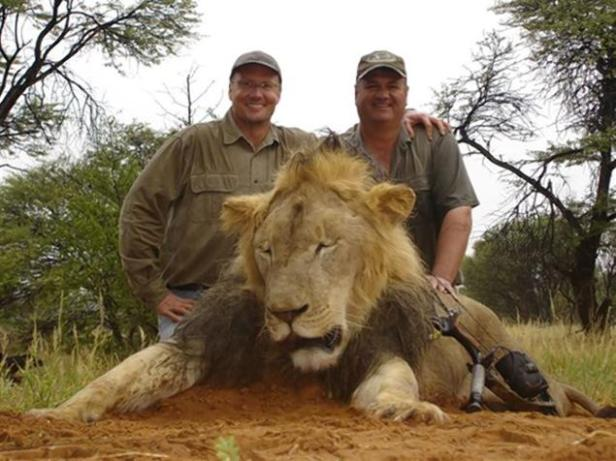 Outrage directed at this fat American whose hunting guides screwed up big time.